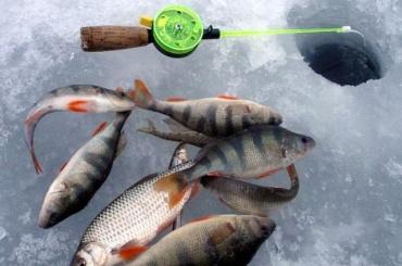 Двух мертвых рыбаков нашли впалатке впод Барнаулом