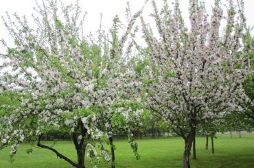 Петербург пополнится на11 тысяч деревьев в2018 году