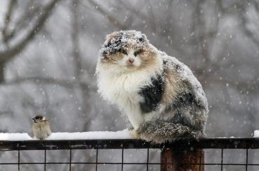 Гололед имокрый снег ждут петербуржцев вНовый год