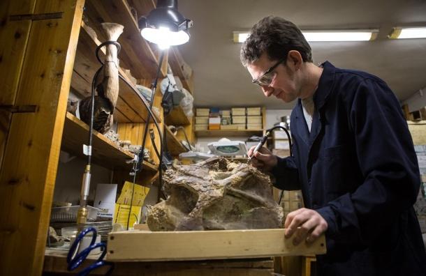 Ученые СПбГУ описали нового российского динозавра— сибиротитана