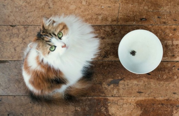 Более 9 тонн кошачьего корма изТаиланда задержали впорту Петербурга