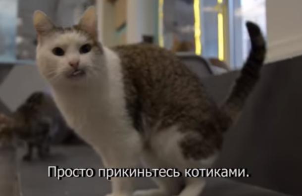 Ульяновских студентов поддержали петербургские котики
