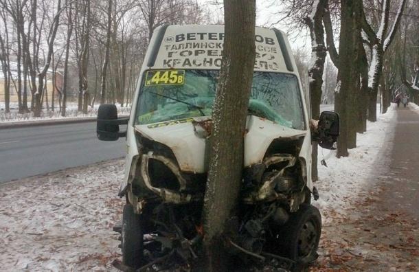 Водитель пострадал при столкновении сдеревом вКрасном Селе