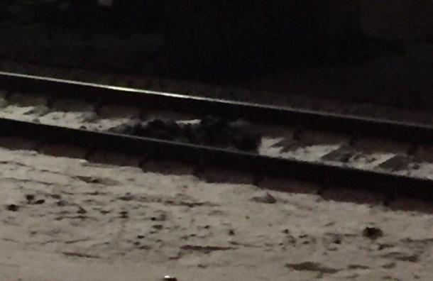 Поезд сбил человека насмерть насевере Петербурга