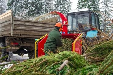 Новогодние ёлки вПетербурге отправят наэкопереработку