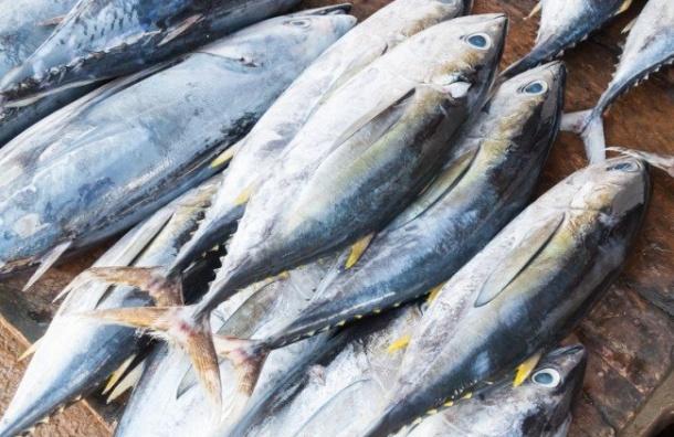 Россельхознадзор непустил вПетербург 16 тонн тунца