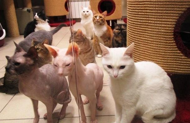 ВПетербурге готовятся кВсемирному дню стерилизации домашних животных
