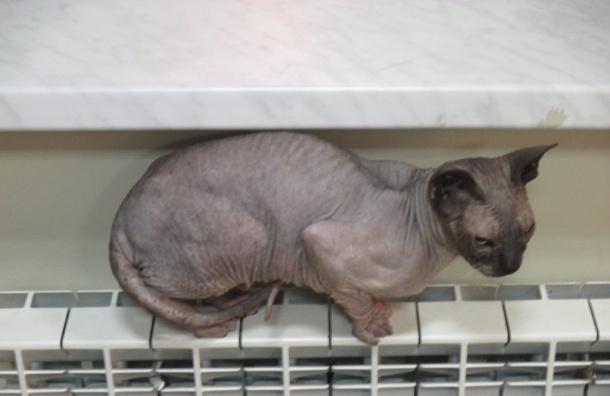 «Ленькин кот» помогает котам исобакам, потерявшим хозяев