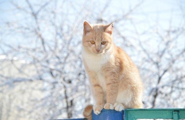Синоптик рассказал, как Петербург может попасть под оранжевый уровень опасности