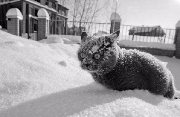 Зима вПетербурге неотступит досередины марта