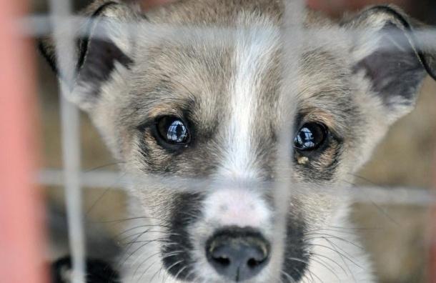 Бездомных животных нестанут отлавливать кЧМ-2018