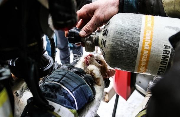 Волгоградские спасатели спасли задохнувшегося при пожаре кота