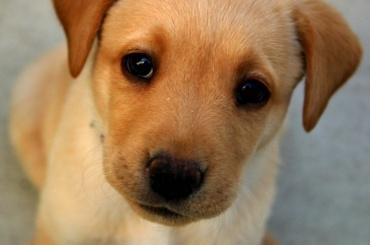 Трупы пяти собак нашли вподвале наПетроградке