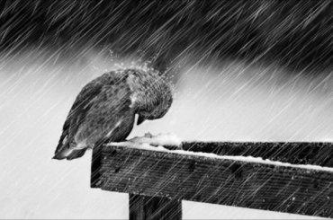 Петербуржцев ждут ветер иснегопад ввоскресенье
