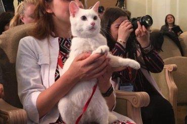 Эрмитажного кота-оракула посадят надиету перед ЧМ-2018