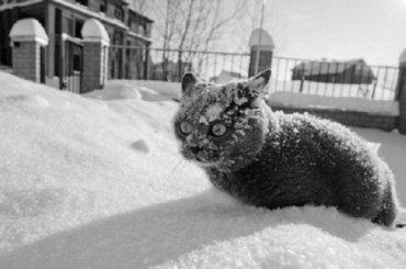 Морозы пришли вПетербург