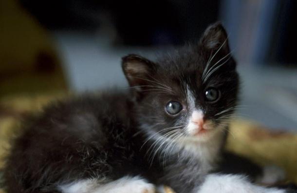Котенок раздора: рецидивист сломал нос знакомому ради кражи котенка