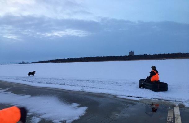Активисты снимали собаку соторвавшейся льдины