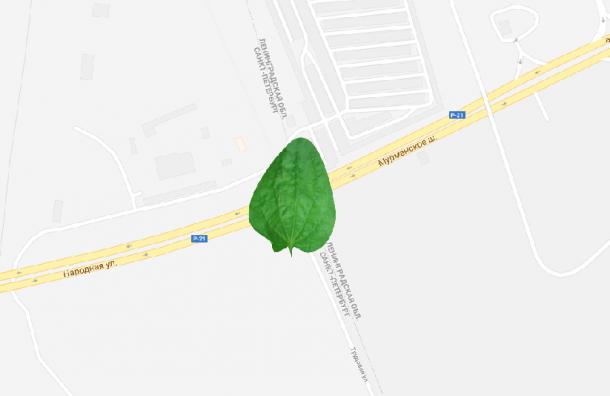Петербуржцы смогут пользоваться «Подорожником» вЛенобласти