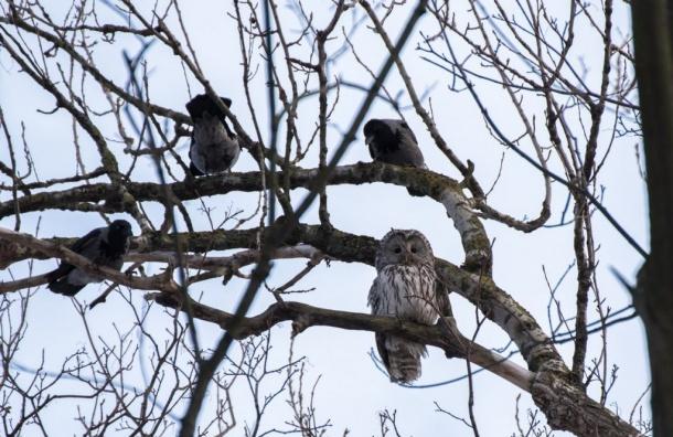 Петербуржцы засняли «птичьи разборки» наВасильевском острове