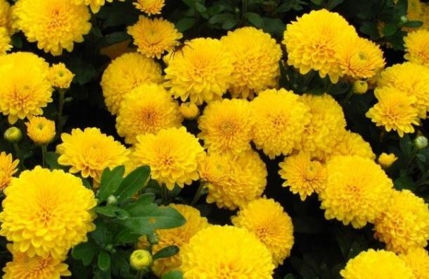 Зараженные цветы привезли вПетербург к8Марта