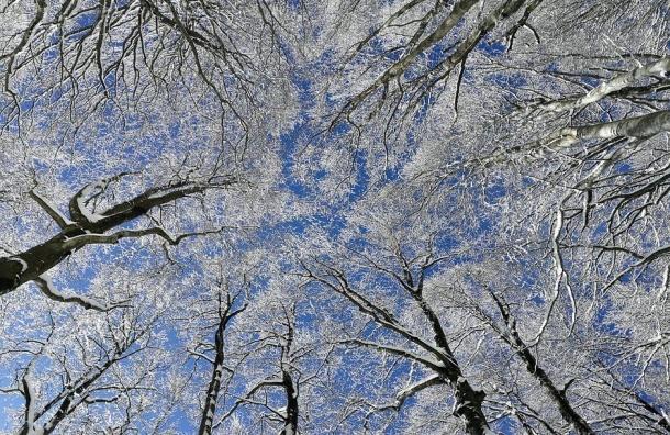 Главный синоптик признался, что недооценил петербургские морозы