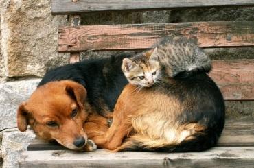 Вишневский просит отменить тендеры науничтожение бродячих животных перед ЧМ-2018