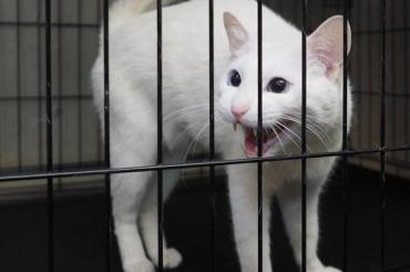 Эрмитажный кот-оракул получит паспорт болельщика ЧМ-2018