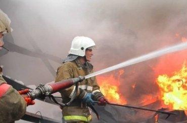 Три лошади сгорели вПриморском районе