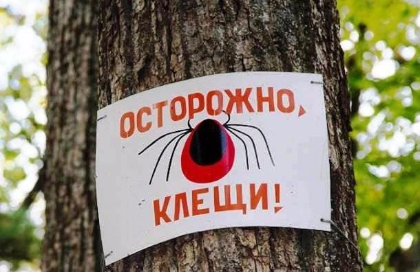 Петербургские медики объявили сезон клещей открытым