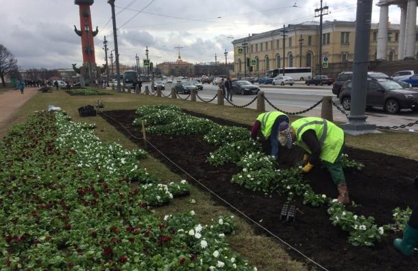 Петербург украсят 8 млн цветов