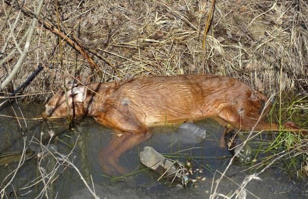 Трупы домашних собак нашли недалеко отТаллинского шоссе