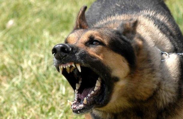 Малышева: бродячих собак нужно отстреливать