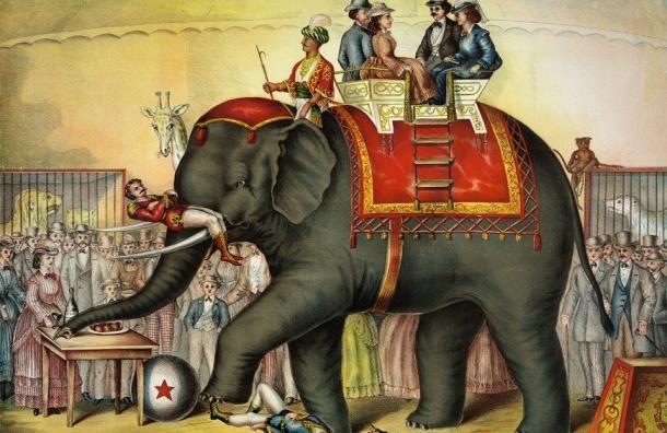 Шествие слонов пройдет вПетербурге вДень города
