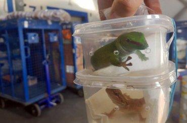 Декоративных ящериц ипауков проверили вПетербурге перед отправкой вМагадан