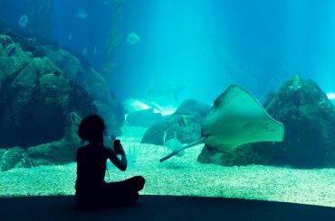 Участок под Океанариум отказались вернуть всостав парк Интернационалистов