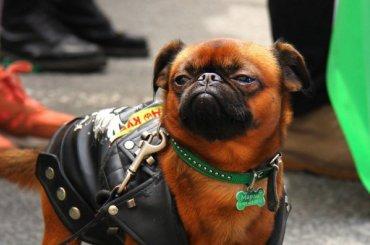 Марш заправа животных пройдет вПетербурге