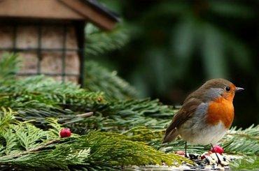 Петербуржец разработал приложение для распознавания птичьих голосов