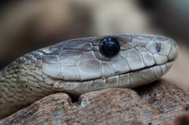 Змеи проснулись вПетербурге