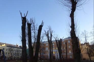 Реестр обрезанных деревьев создают вПетербурге