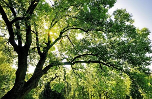Смольный пересчитает деревья врайонах сновостройками