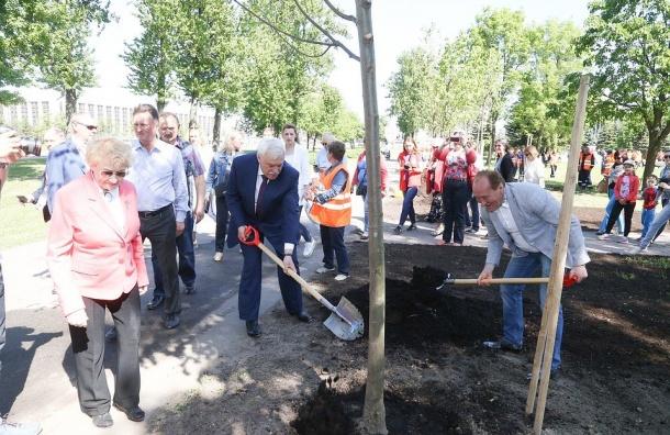 Липовая аллея появилась вПулковском парке