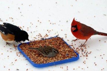 Россельхознадзор непустил вПетербург мексиканские кормовые добавки для птиц
