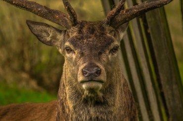 Роспотребнадзор запретит добавлять валкоголь оленьи рога
