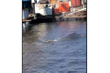 Очевидцы: вВыборгском заливе появился кит