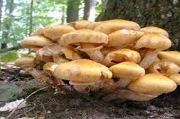 Более тысячи человек отравились вИране грибами