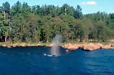 Горбатый кит уплыл изЛенобласти