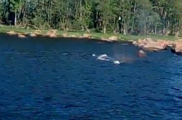 Очевидцы: вВыборгском заливе поселился кит