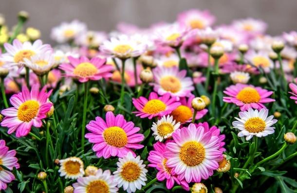 Ржавчина стала причиной уничтожения 1200 цветов