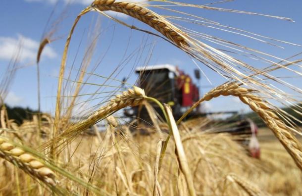 Излишки зерна Россия отдаст нуждающимся странам